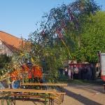 maibaum-2019-wernikow(7)